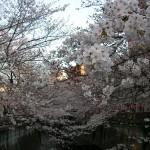 川の両側から花が伸びています