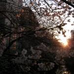 沈む日を背景に