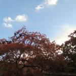 201111-2ndday-fallseason-08